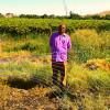 Eksteenskuil Agricultural Cooperative model breaking barriers